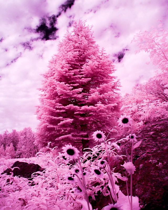 Infrared of the day 37