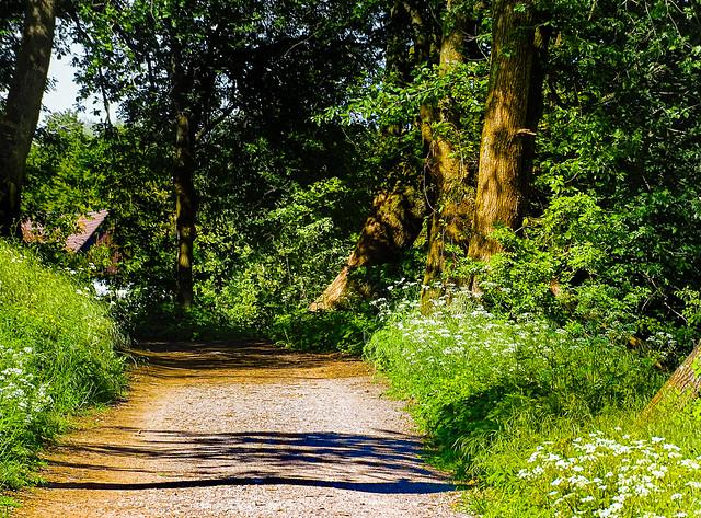 Along the path / Dem Weg entlang