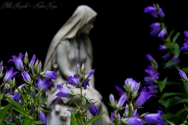 Between the purple Flowers...