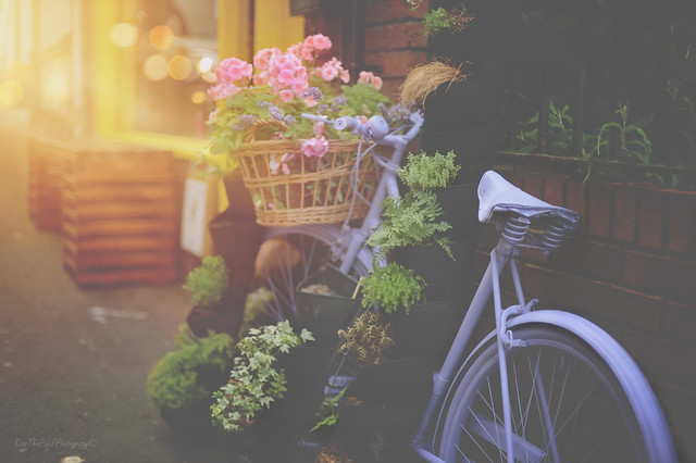 Sunset Bike... (Explored 😊)
