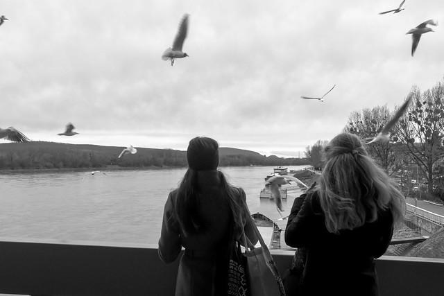 Bratislava n. 11 - Il ponte