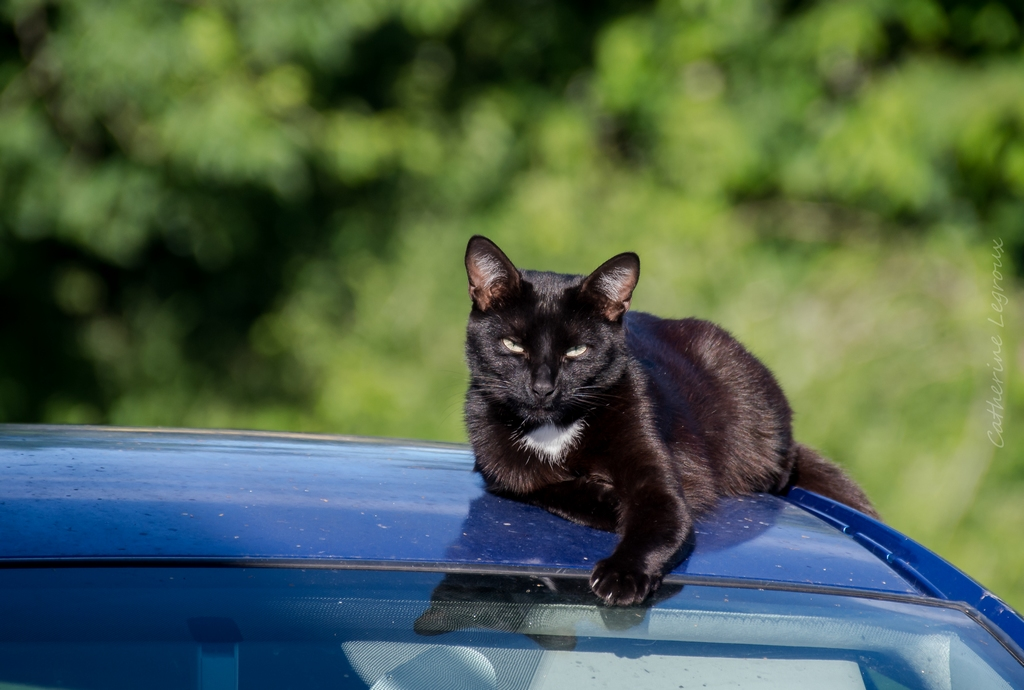 Animaux de compagnie - Page 15 51296836107_6c926f9bf4_o