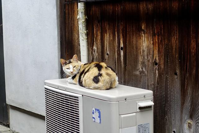 Today's Cat@2021−07−07