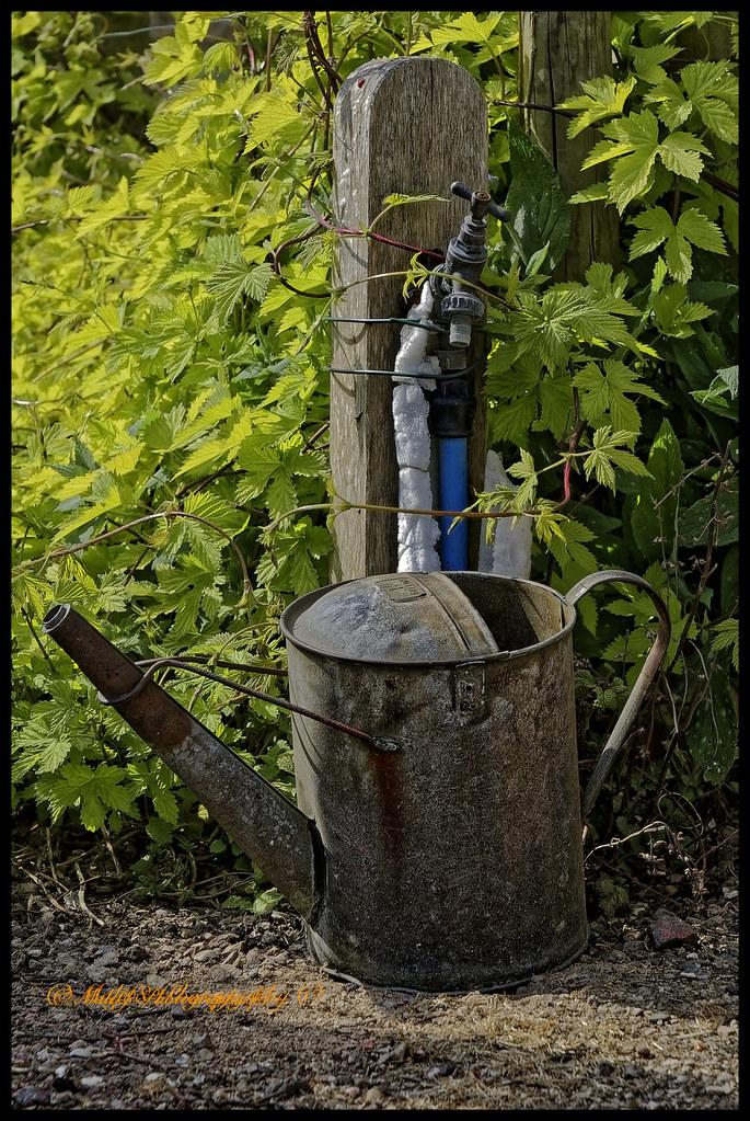 Brancaster Church Garden (Watering can)