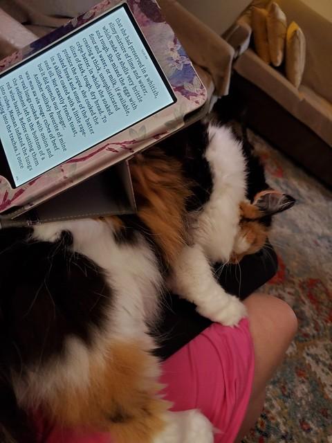 Uthgerd demanding to use my lap desk