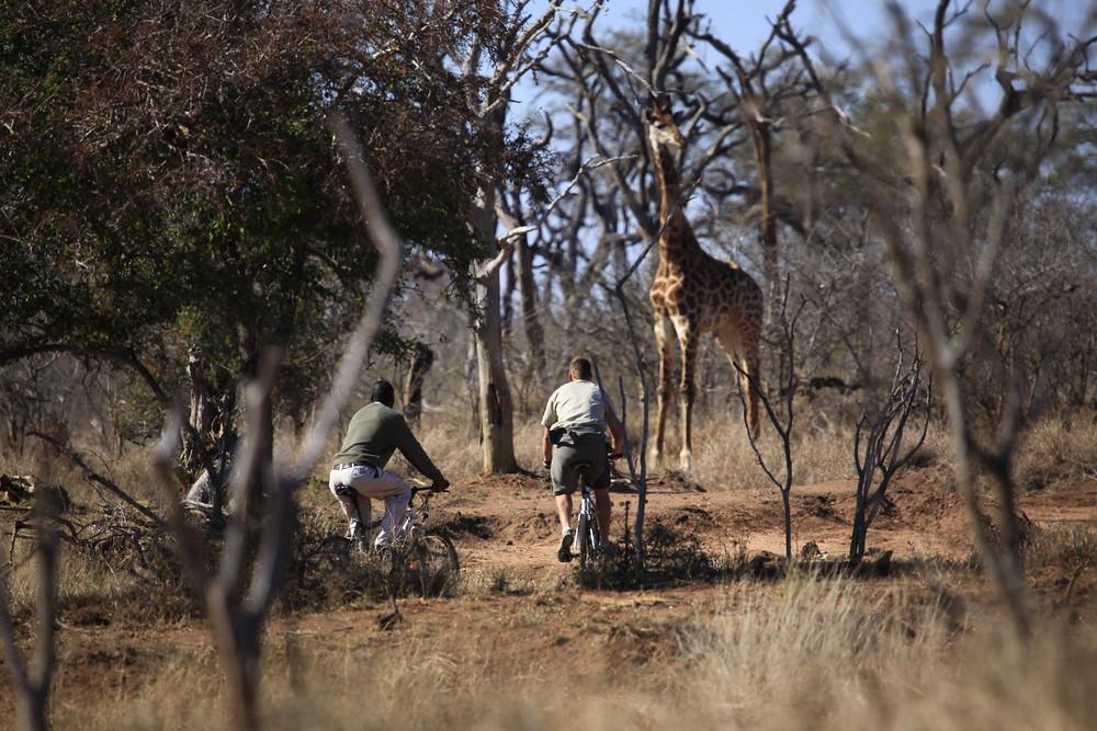 呼籲頑皮世界不應為了展演奇珍異獸,在無助保育的狀況下引入來源可疑的長頸鹿。