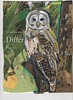 13 FEB Barred Owl They Are186