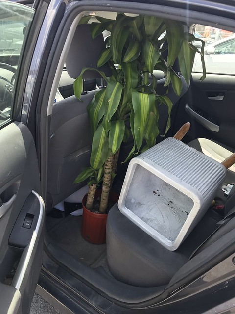 Driving home with a plant is not fun