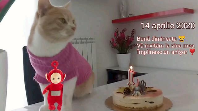 It's my birthday 😺
