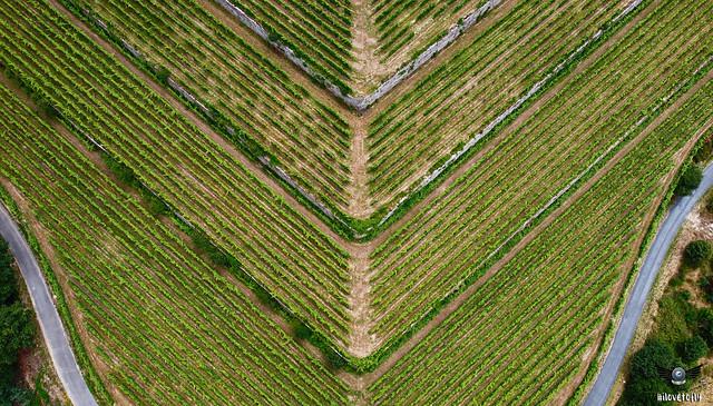 Simetrías no Ribeiro... e veña viño !!!