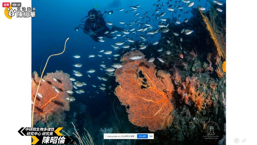 陳昭倫指出,外木山周圍海域海洋生態豐富。擷取自記者會直播