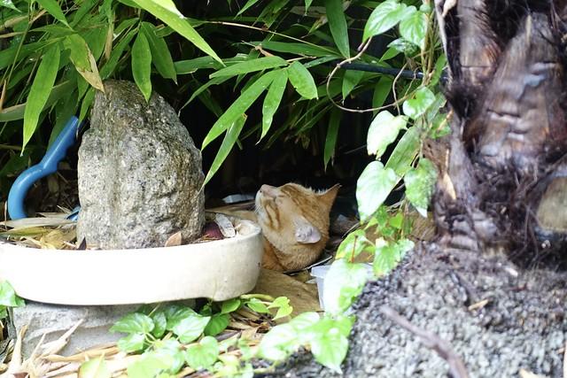 Today's Cat@2021−07−08