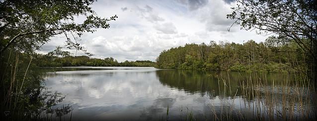 au bord du l'étang...