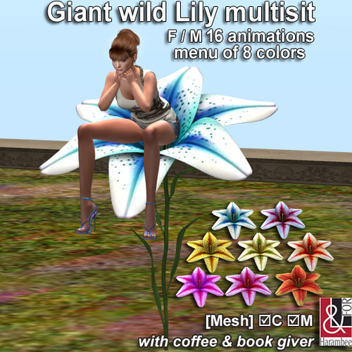 Giant wild Lily multisit