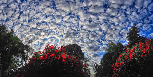 Tiled Sky