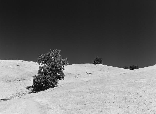 Sunol Wilderness
