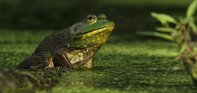 little green poser