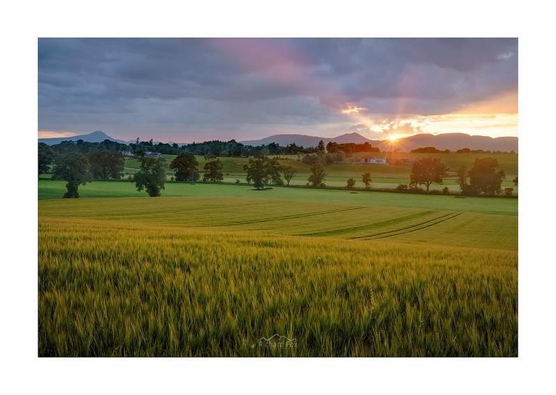 Barley Beams