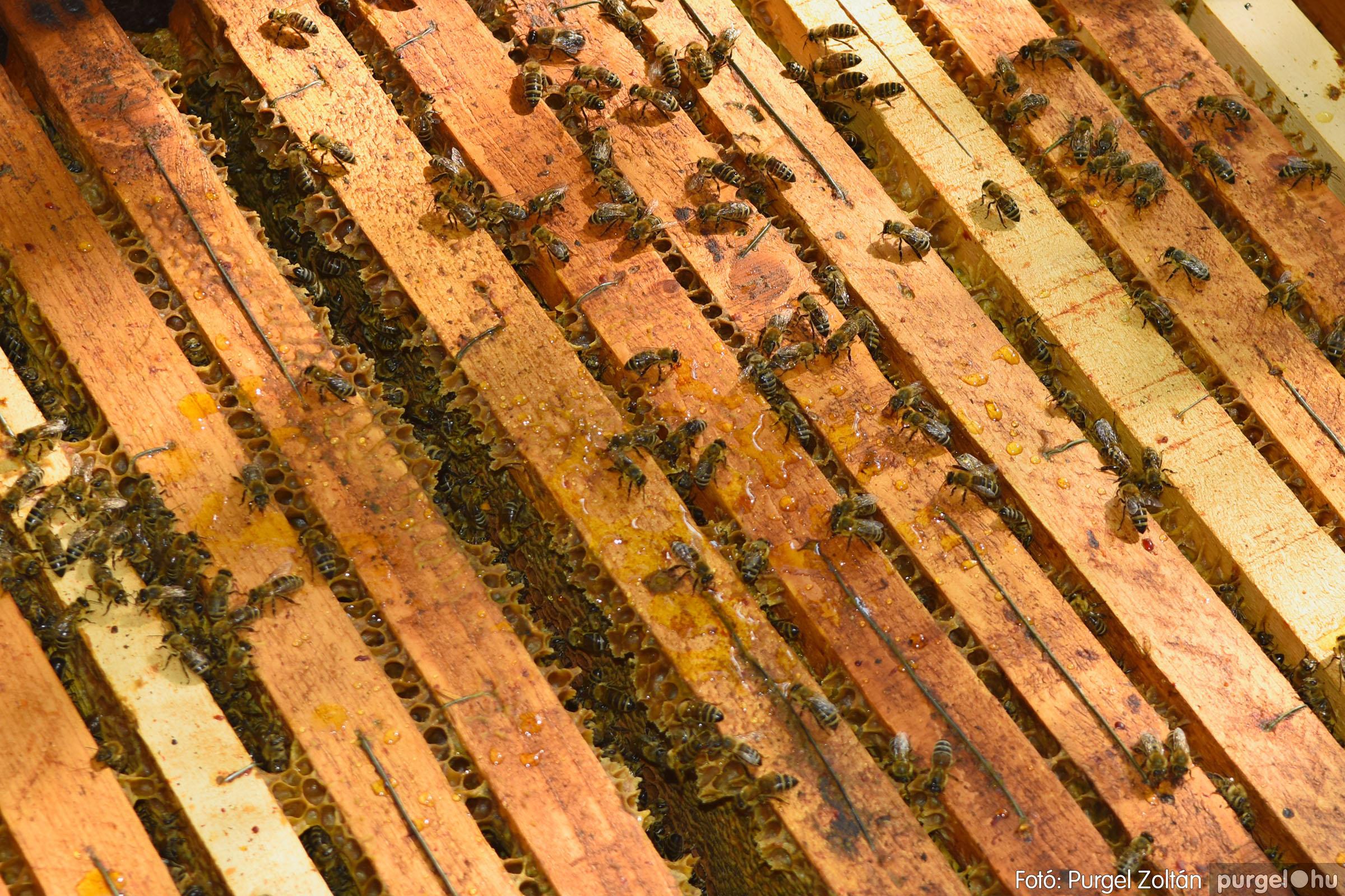 2021.07.08. 031 Gyenes Béla méhészetében - Fotó:PURGEL ZOLTÁN© DSC_8160q.jpg