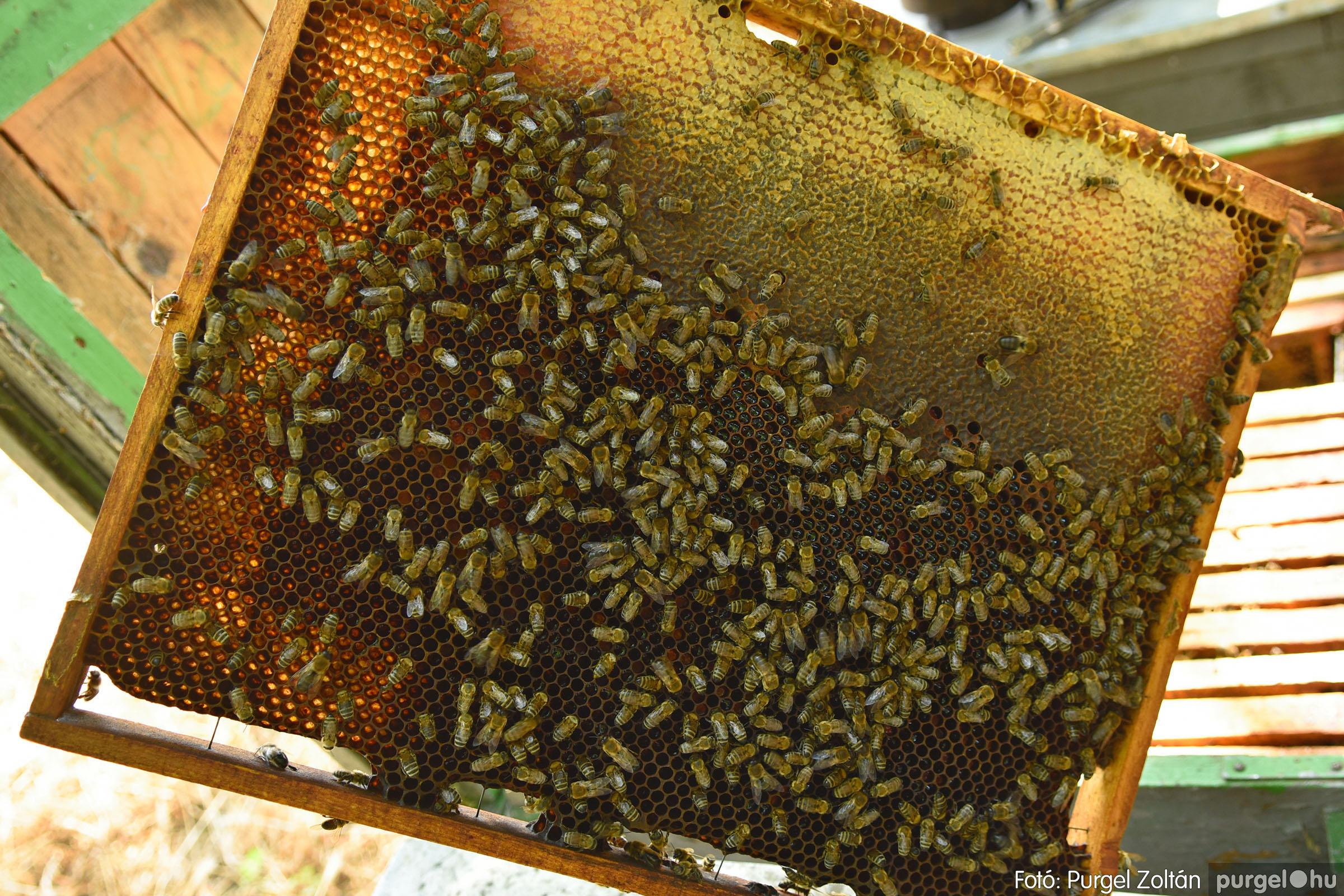 2021.07.08. 016 Gyenes Béla méhészetében - Fotó:PURGEL ZOLTÁN© DSC_8132q.jpg