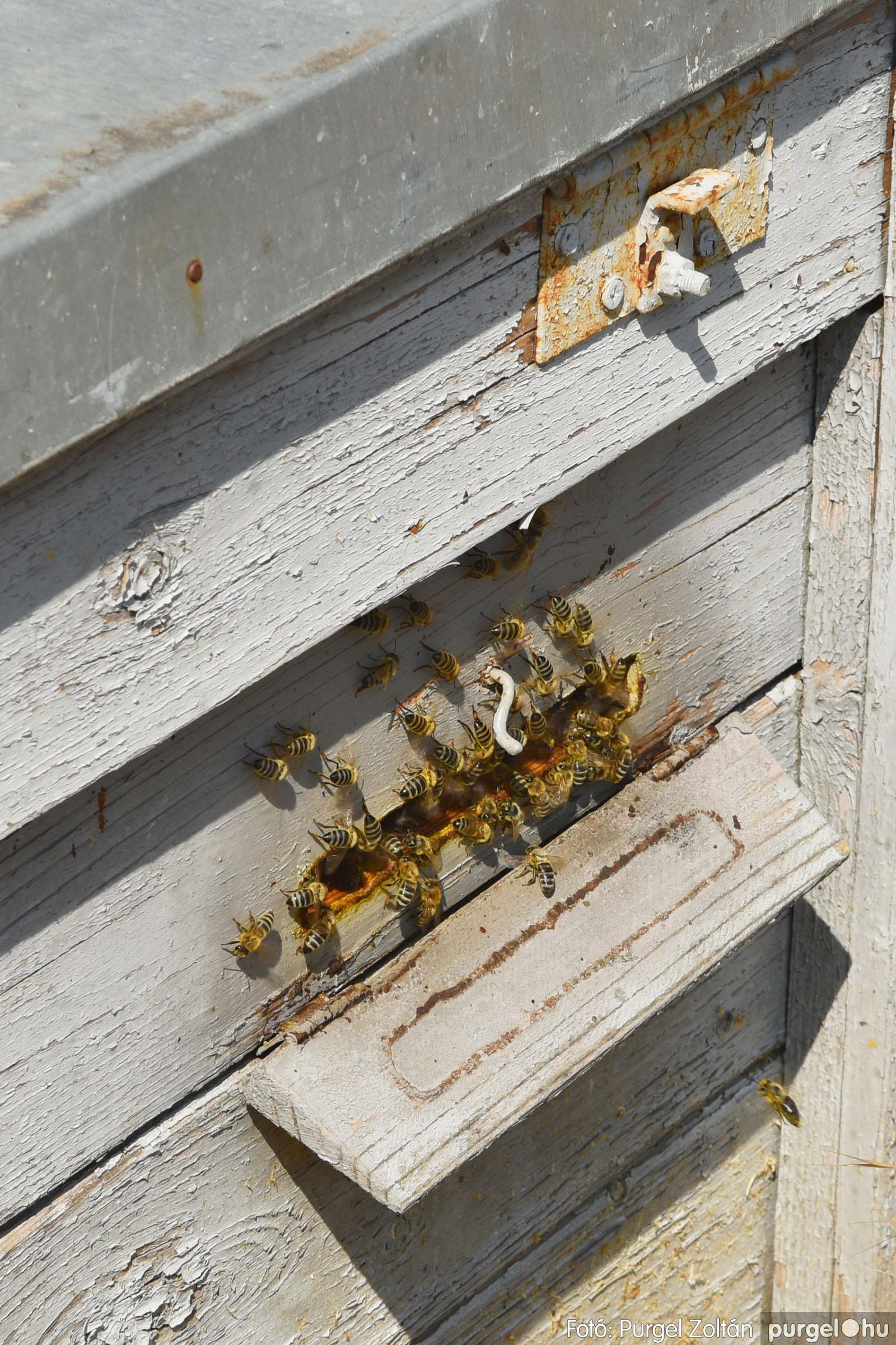 2021.07.08. 004 Gyenes Béla méhészetében - Fotó:PURGEL ZOLTÁN© DSC_8077q.jpg