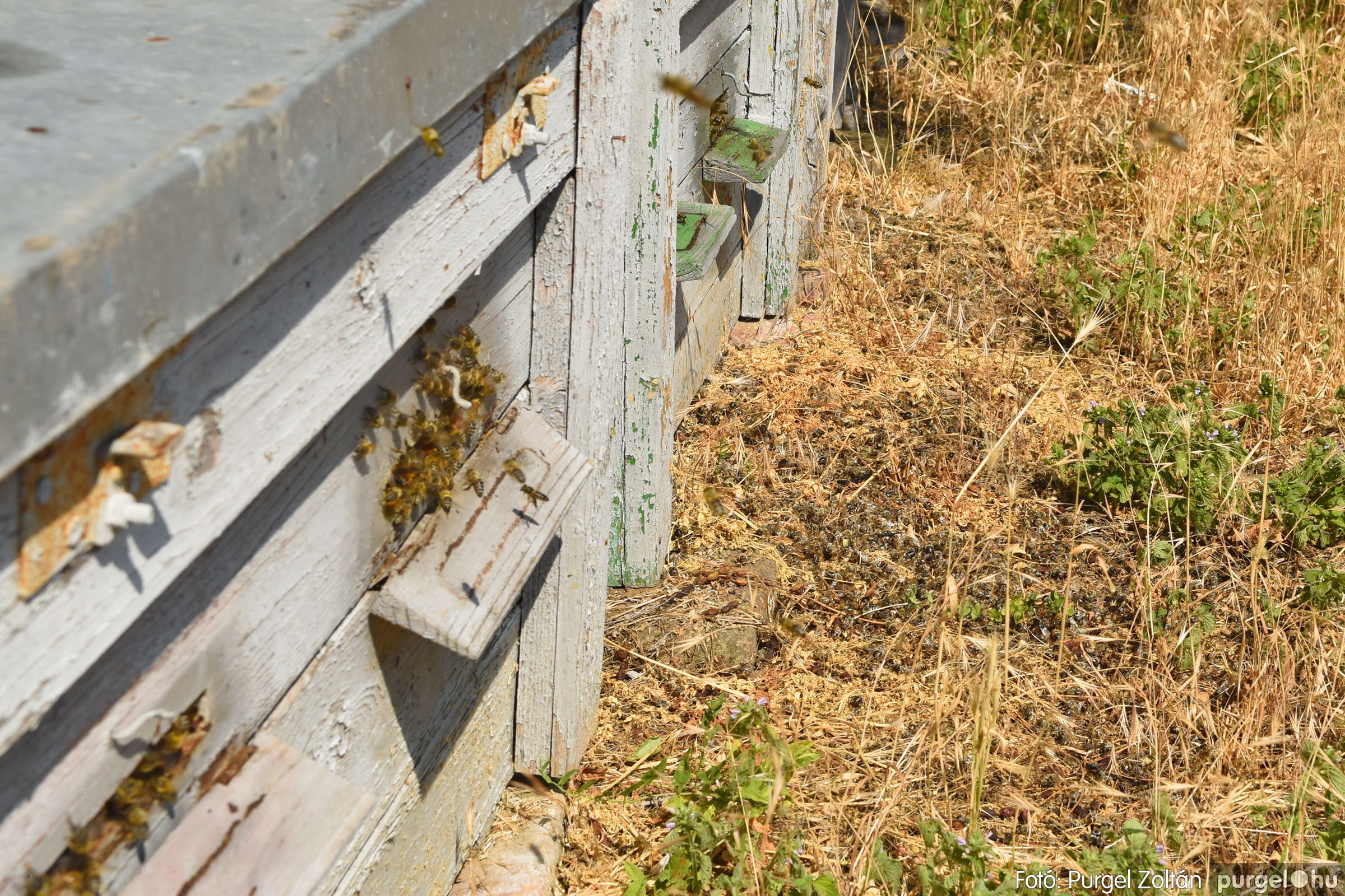 2021.07.08. 002 Gyenes Béla méhészetében - Fotó:PURGEL ZOLTÁN© DSC_8074q.jpg