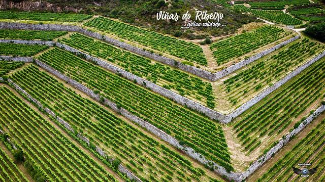 Viñas do Ribeiro.... e veña viño !!