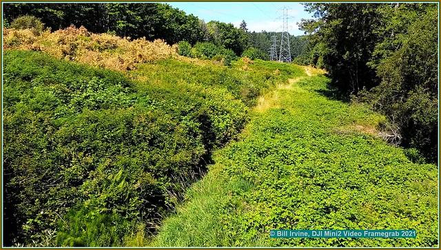 Montego/Powerline Overgrown Trail