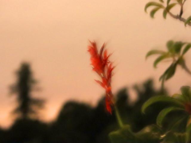 L'écho des palabres, en nuit d'estives.