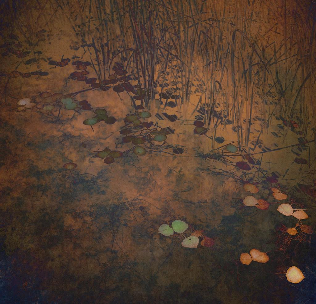 Leaves on Pond b Zoltan Puskas