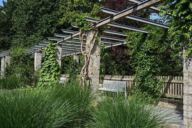 DSC26416 Würzburg Japanischer Garten + Rosengarten 2020
