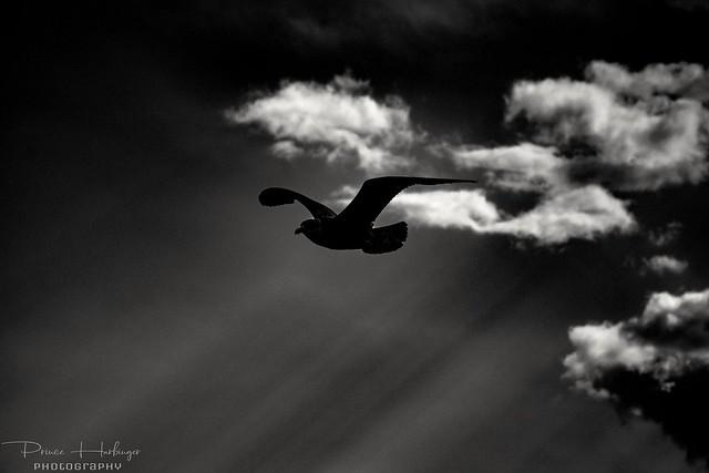 My destiny's to fly.