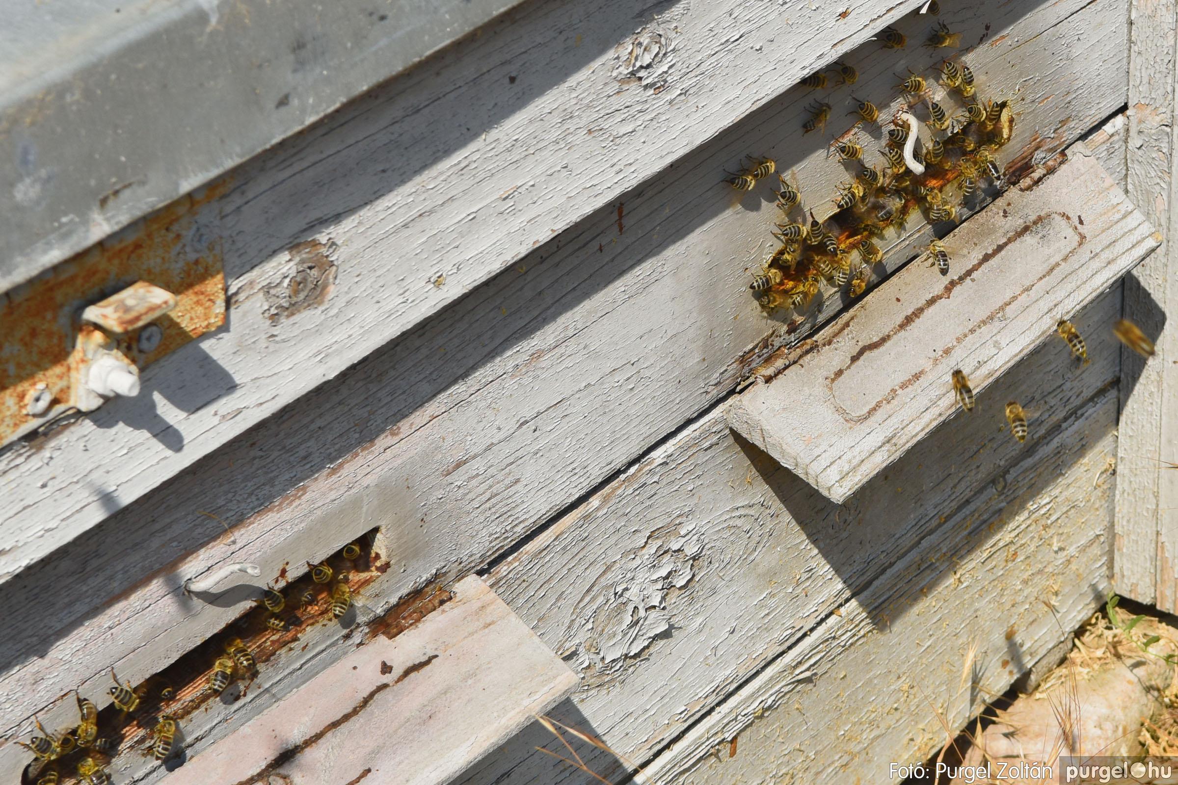 2021.07.08. 003 Gyenes Béla méhészetében - Fotó:PURGEL ZOLTÁN© DSC_8076q.jpg