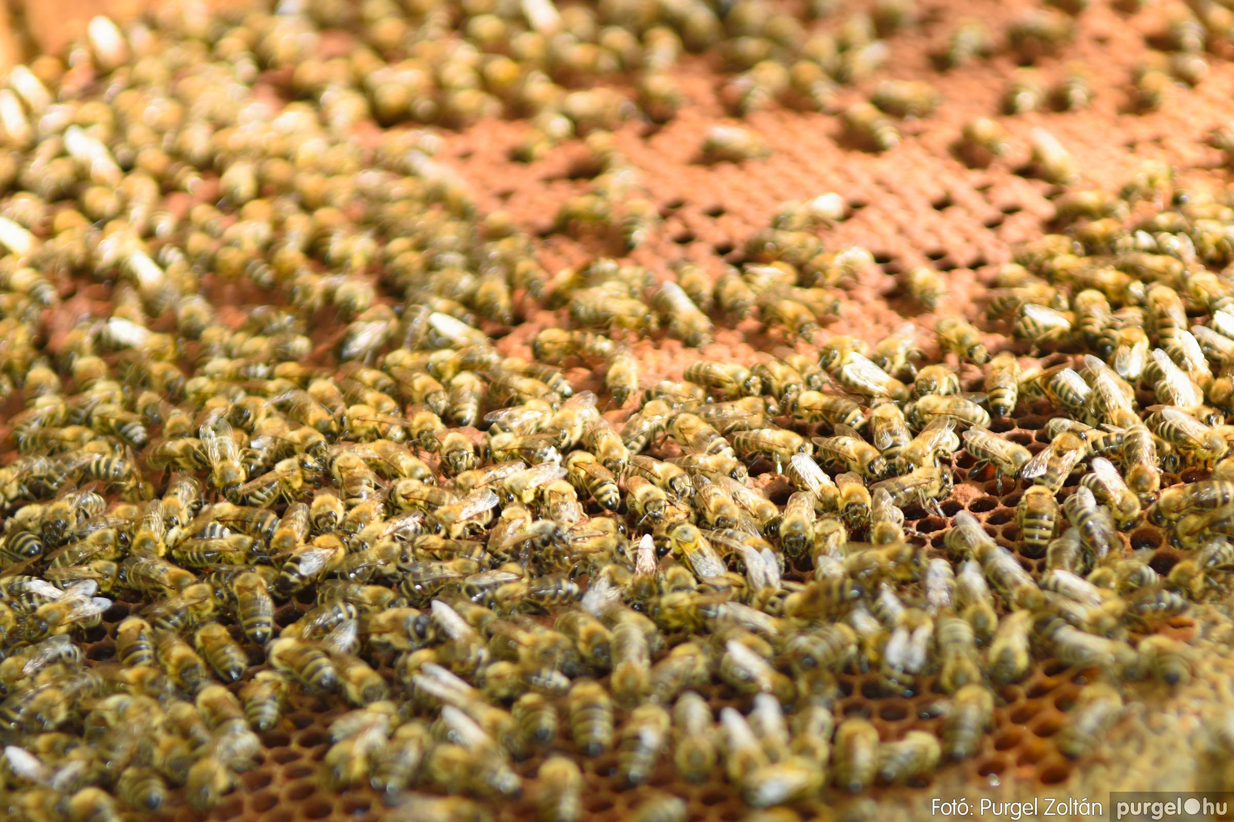 2021.07.08. 029 Gyenes Béla méhészetében - Fotó:PURGEL ZOLTÁN© DSC_8156q.jpg
