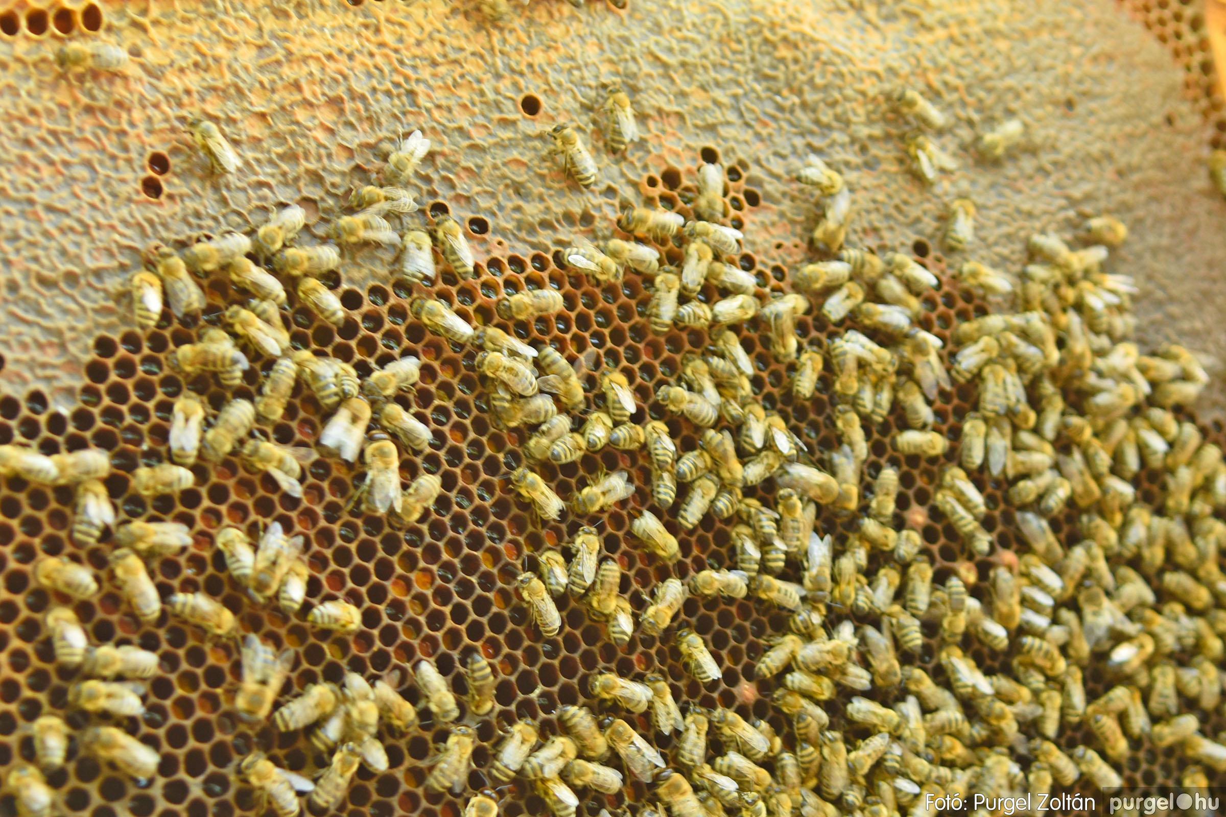 2021.07.08. 024 Gyenes Béla méhészetében - Fotó:PURGEL ZOLTÁN© DSC_8148q.jpg