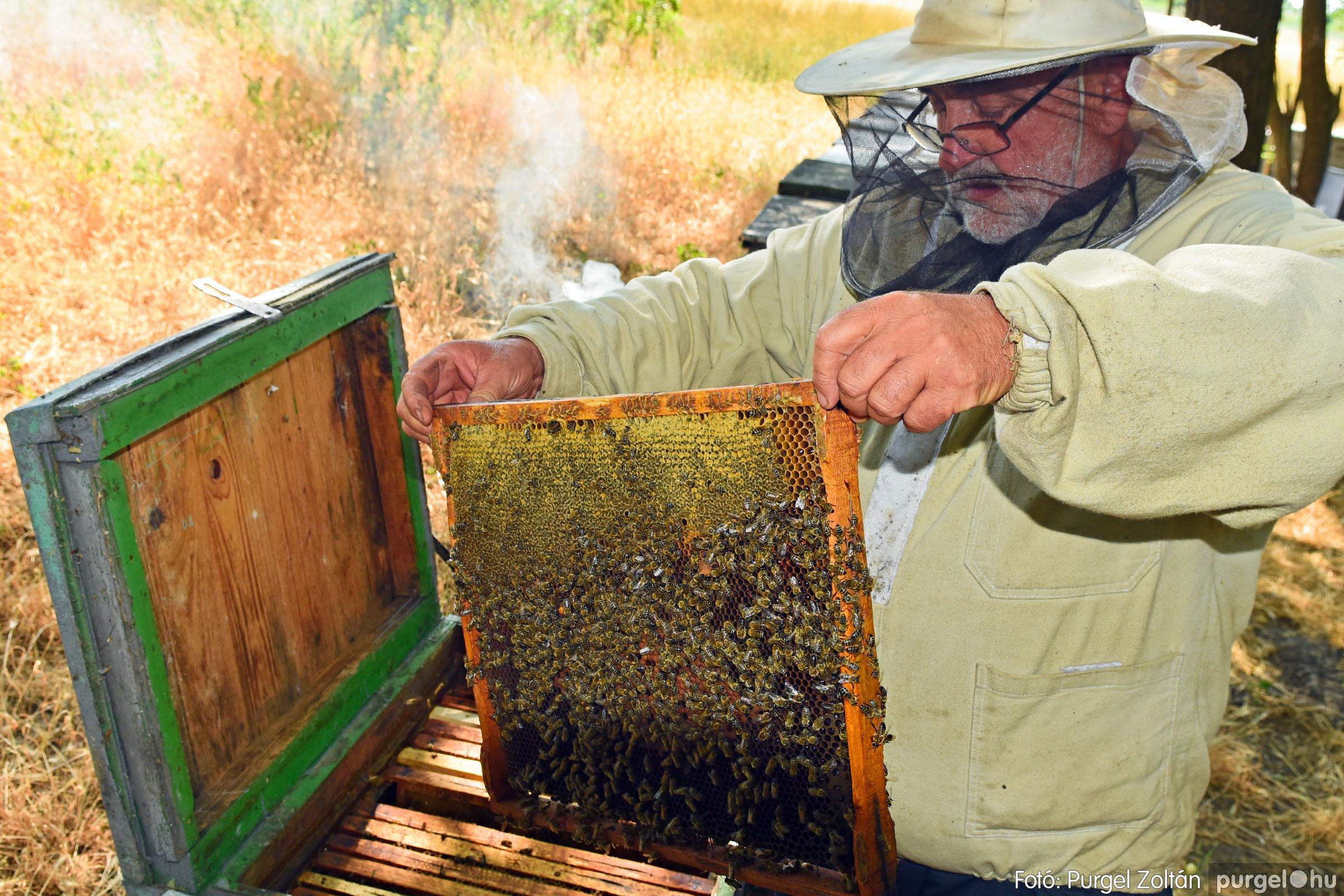 2021.07.08. 022 Gyenes Béla méhészetében - Fotó:PURGEL ZOLTÁN© DSC_8143q.jpg