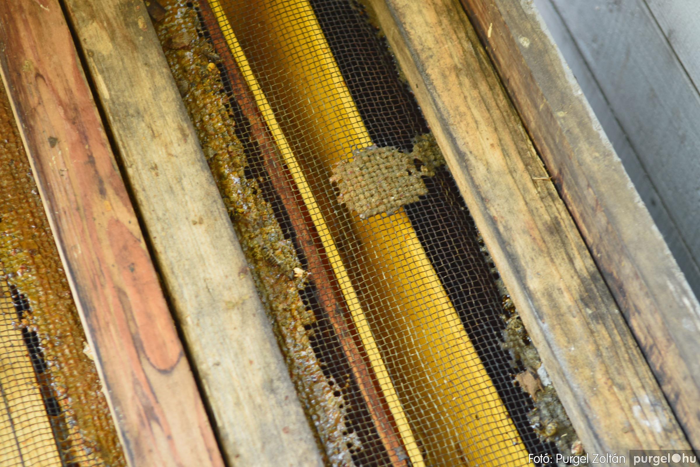 2021.07.08. 012 Gyenes Béla méhészetében - Fotó:PURGEL ZOLTÁN© DSC_8110q.jpg