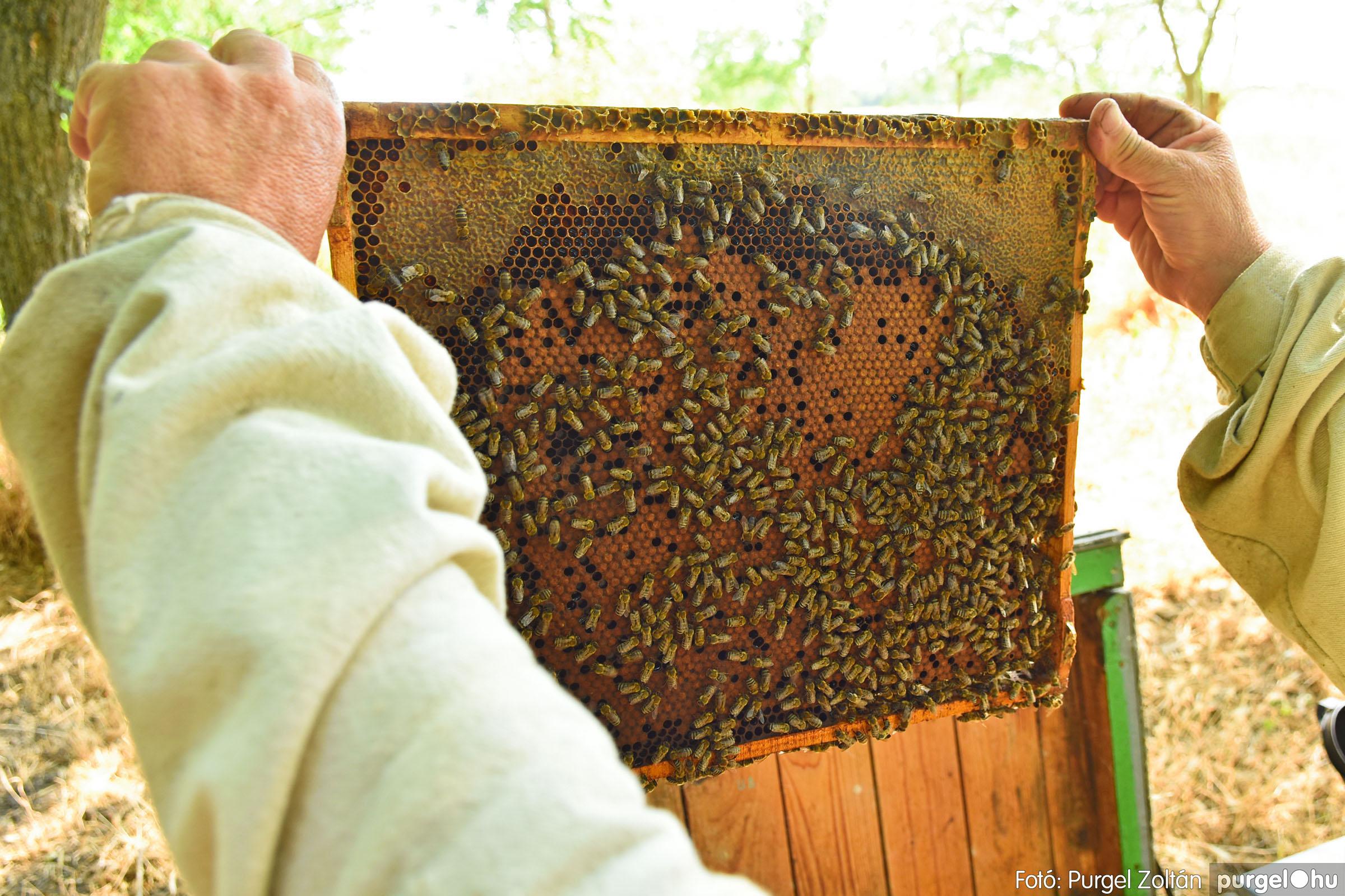 2021.07.08. 027 Gyenes Béla méhészetében - Fotó:PURGEL ZOLTÁN© DSC_8154q.jpg