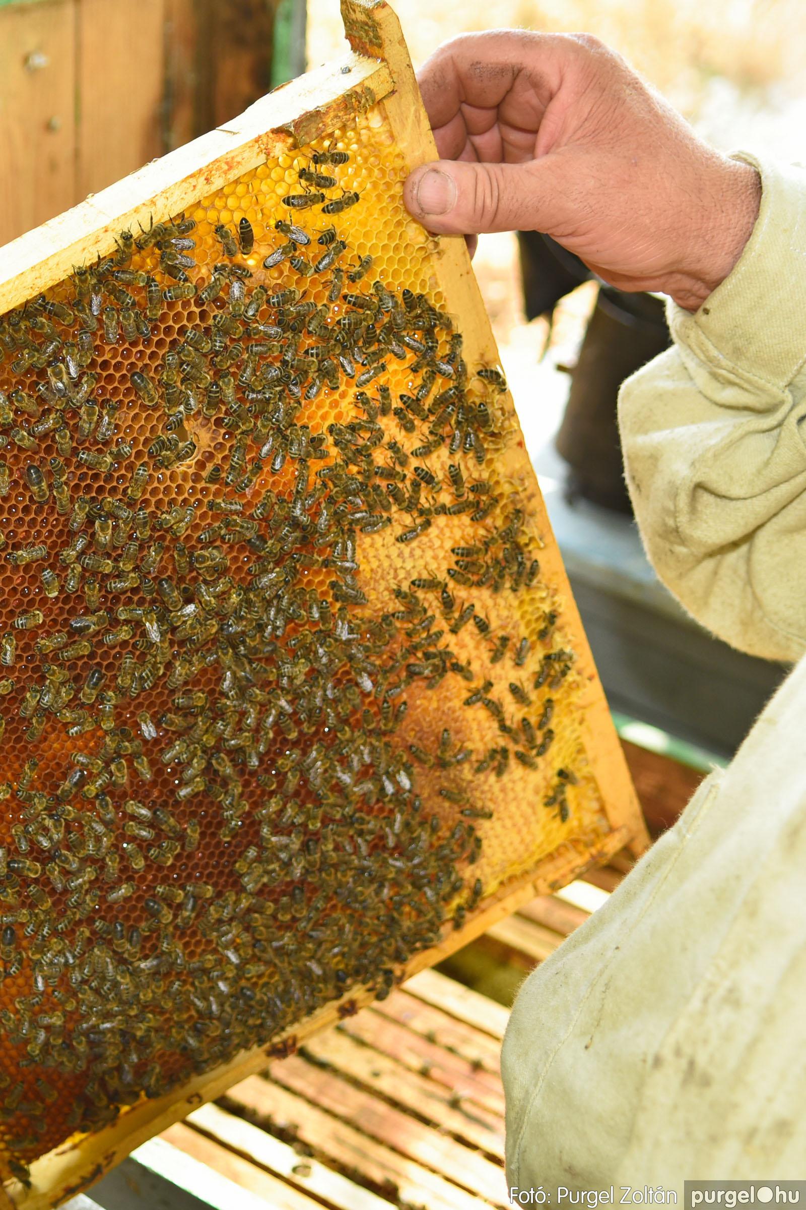 2021.07.08. 020 Gyenes Béla méhészetében - Fotó:PURGEL ZOLTÁN© DSC_8139q.jpg