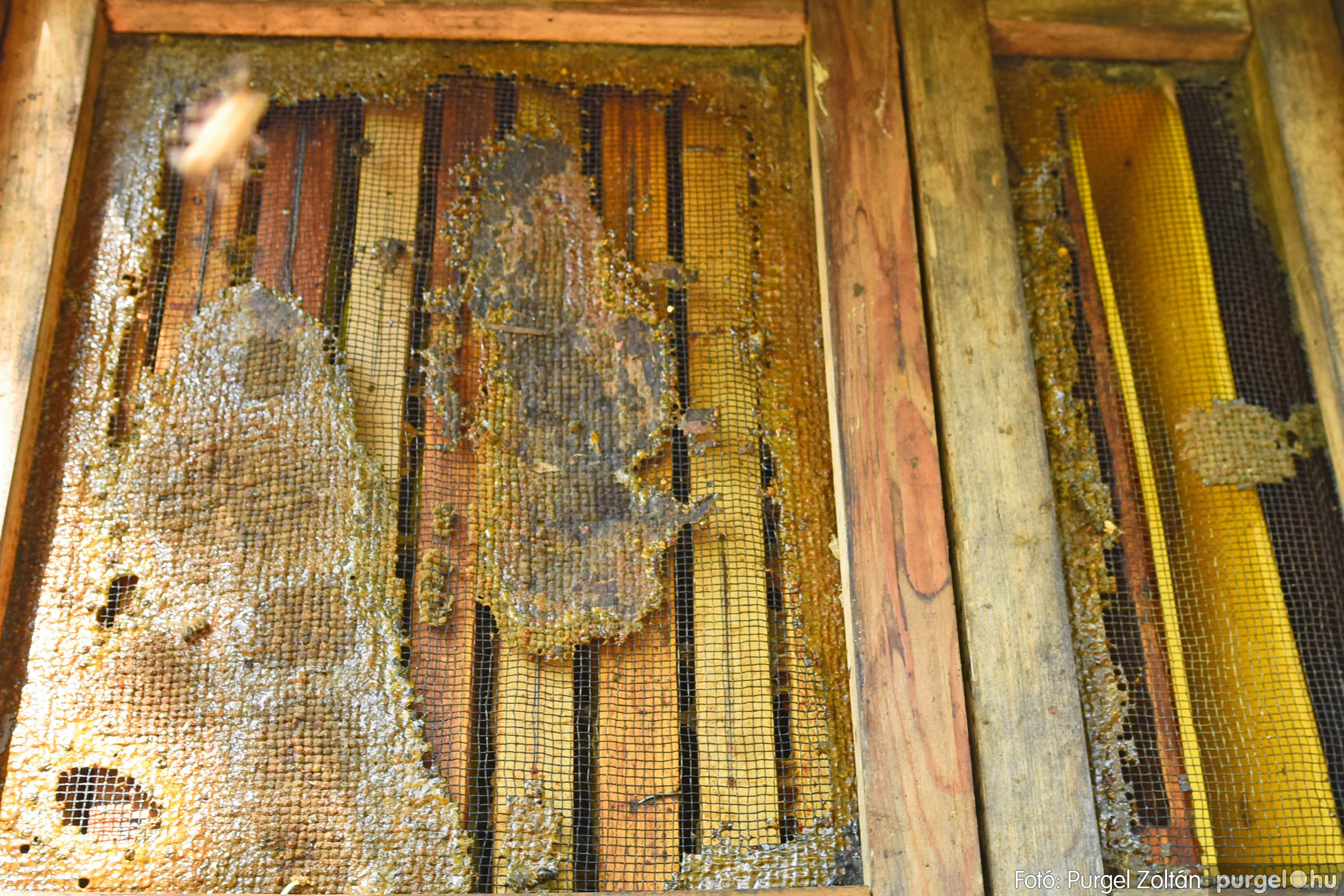 2021.07.08. 011 Gyenes Béla méhészetében - Fotó:PURGEL ZOLTÁN© DSC_8109q.jpg