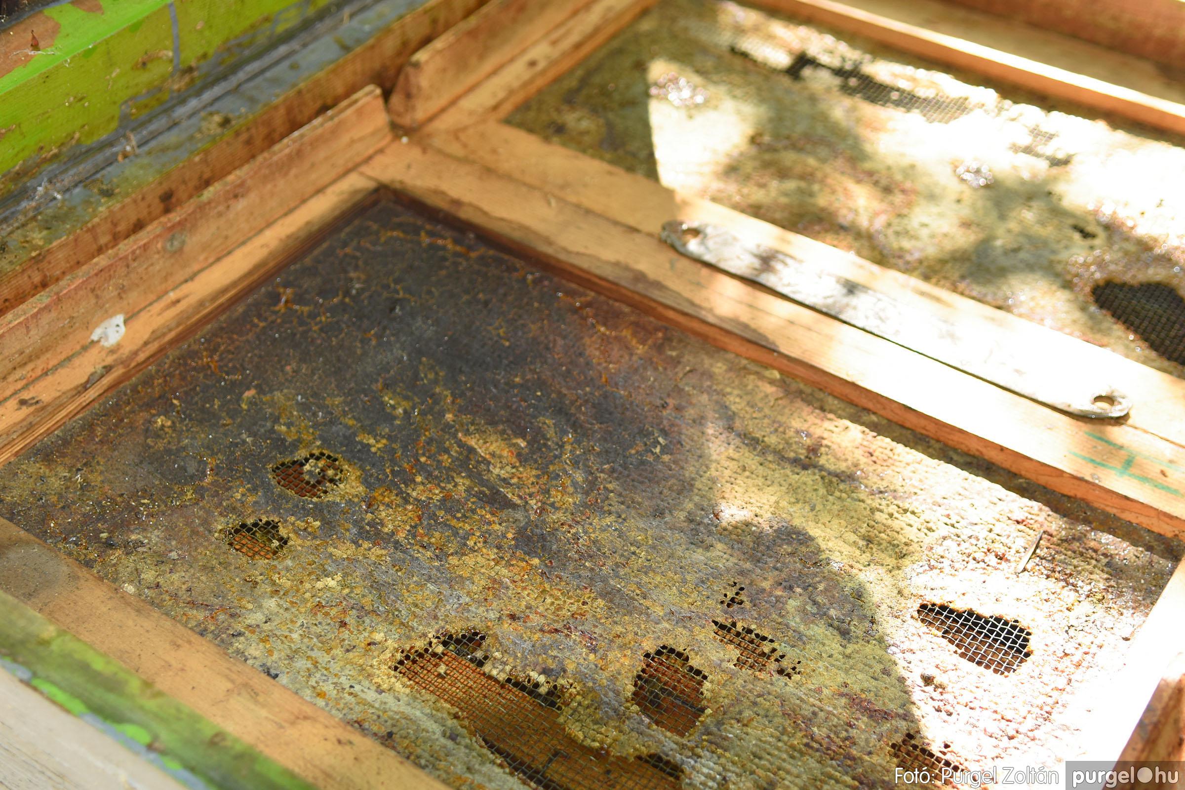 2021.07.08. 009 Gyenes Béla méhészetében - Fotó:PURGEL ZOLTÁN© DSC_8090q.jpg