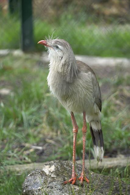 Unknown bird ...