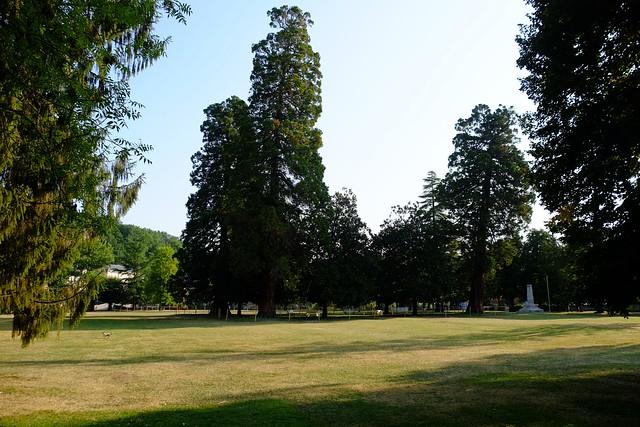Brantôme, Séquoia géant