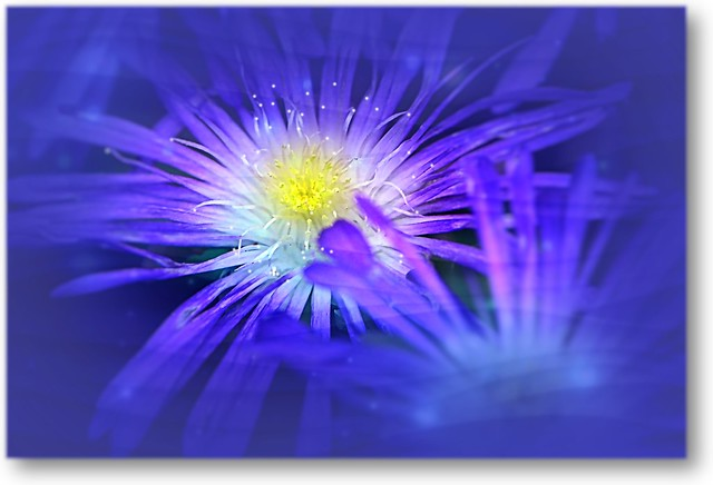 Glorious succulent flower