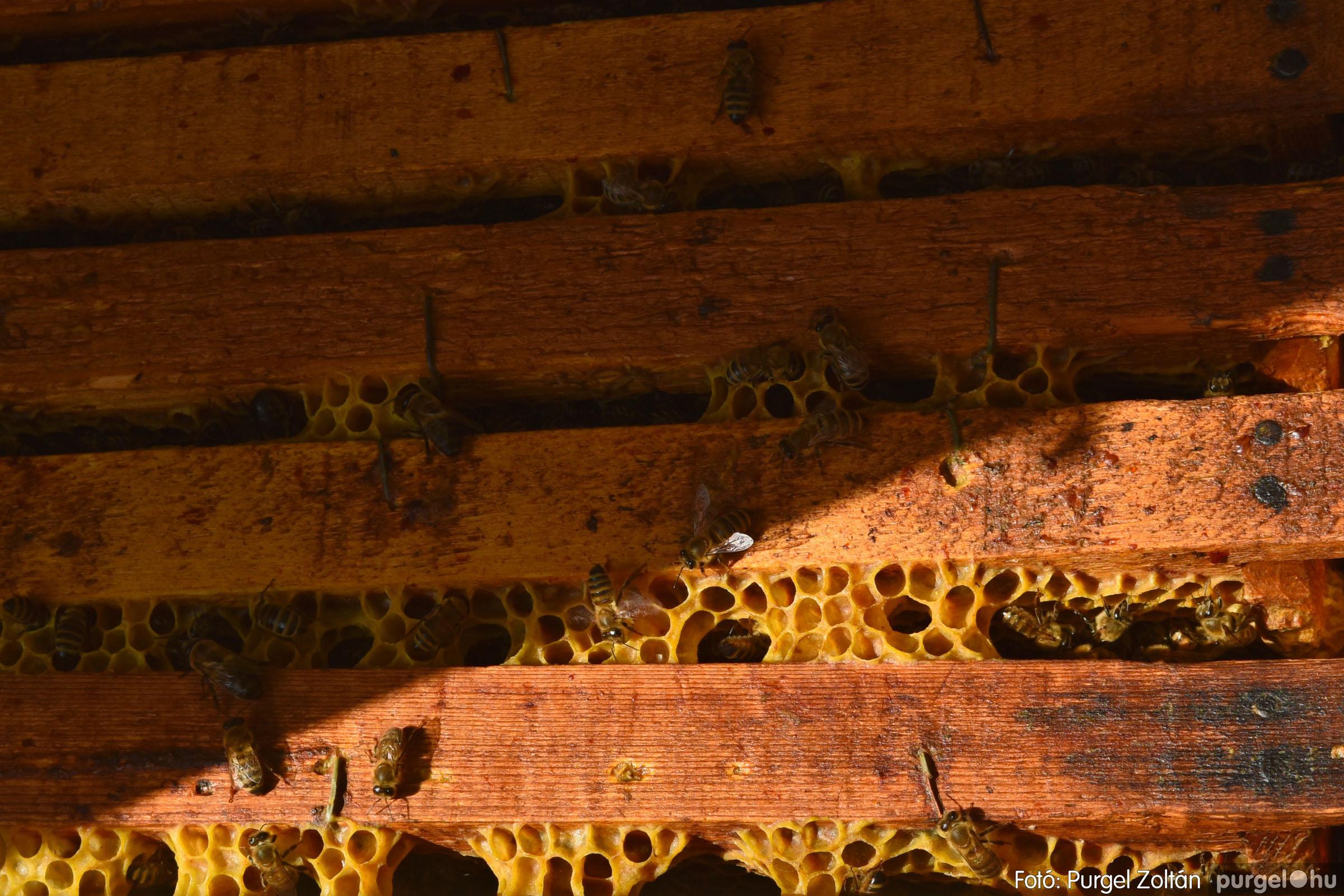 2021.07.08. 039 Gyenes Béla méhészetében - Fotó:PURGEL ZOLTÁN© DSC_8173q.jpg