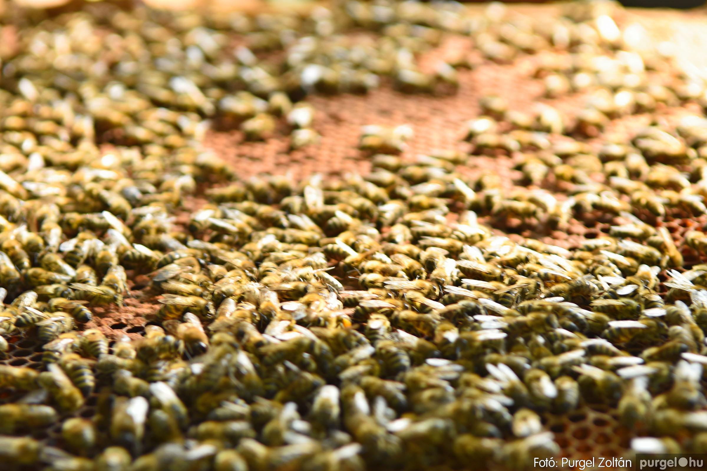 2021.07.08. 028 Gyenes Béla méhészetében - Fotó:PURGEL ZOLTÁN© DSC_8155q.jpg