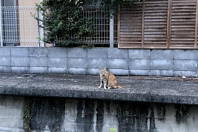 Today's Cat@2021−07−10