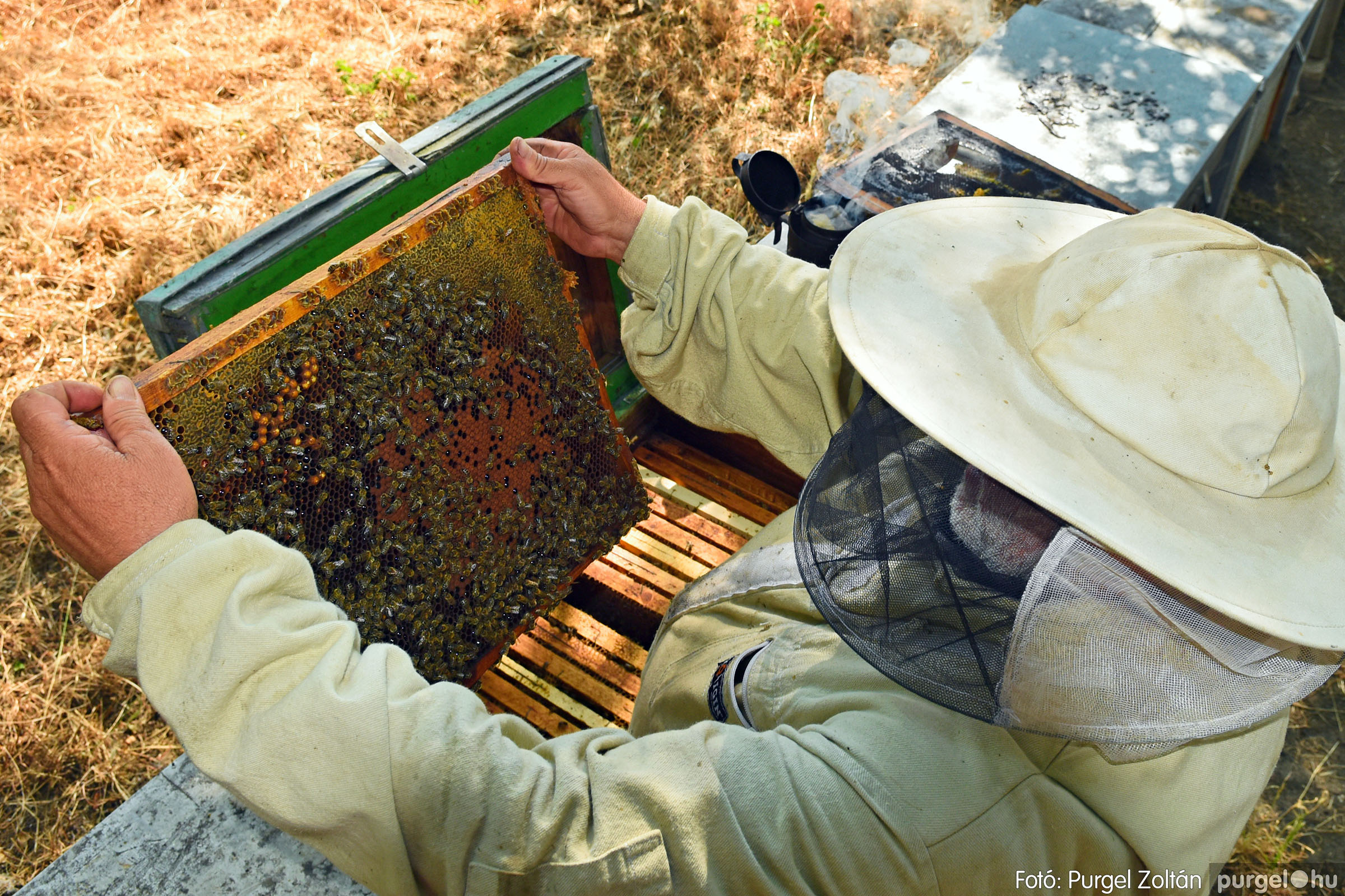 2021.07.08. 026 Gyenes Béla méhészetében - Fotó:PURGEL ZOLTÁN© DSC_8152q.jpg