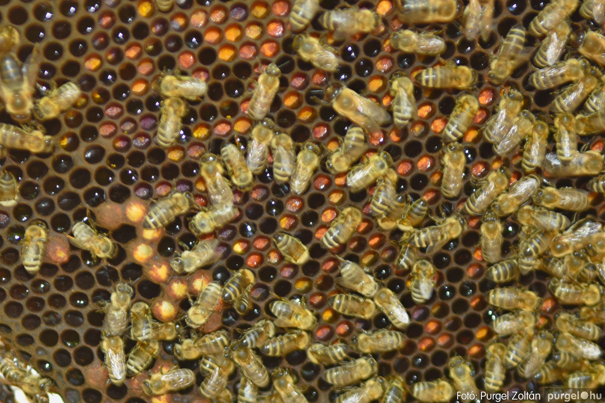 2021.07.08. 025 Gyenes Béla méhészetében - Fotó:PURGEL ZOLTÁN© DSC_8150q.jpg