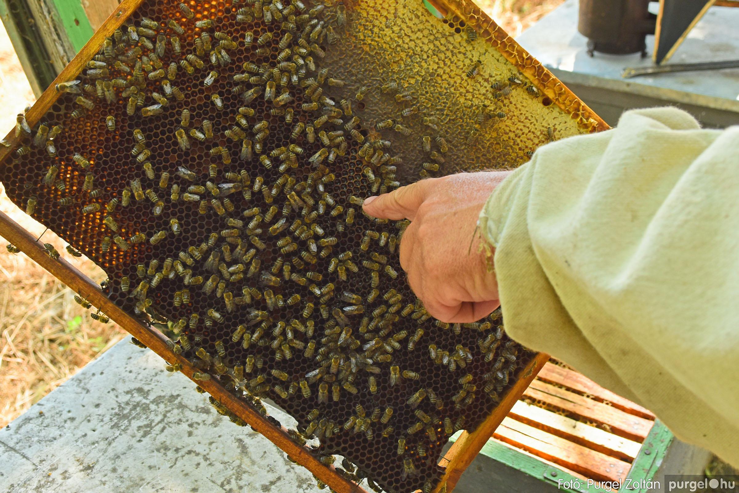 2021.07.08. 015 Gyenes Béla méhészetében - Fotó:PURGEL ZOLTÁN© DSC_8131q.jpg